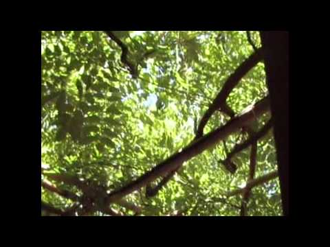 Hakone Garden - Saratoga, CA