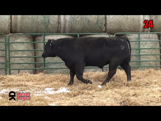 Kaiser Angus Ranch Lot 24