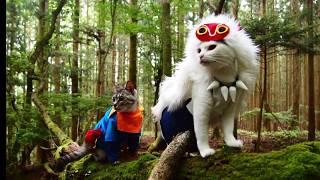 苔の森「山犬嶽」は信仰の場でもありとても神秘的な場所があります。そ...