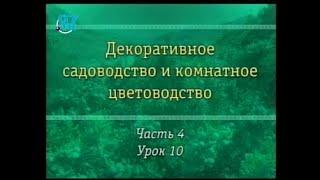 Цветы. Урок 4.10. Хвойные деревья и кустарники