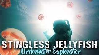 STINGLESS Jellyfish lake | KAKABAN Berau Borneo TRAVEL VLOG