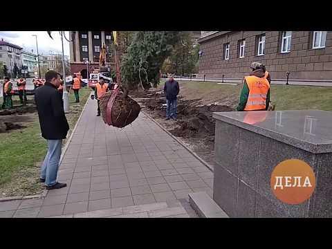 Посадка первых новых ёлок у администрации Красноярского края