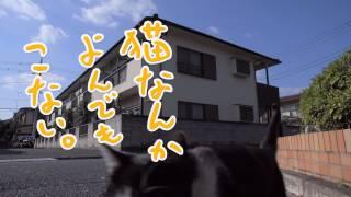 映画『猫なんかよんでもこない。』超特報 2016年全国公開! 出演:...