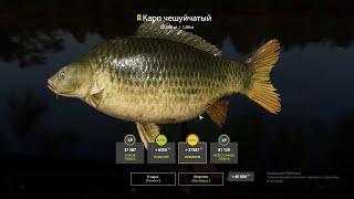 Русская Рыбалка 4 RF4 Янтарка 3 трофа карпа за 30 минут