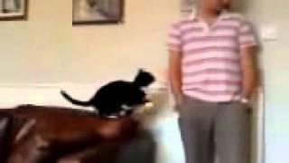 кот напакостил и просит прощения очень смешно!