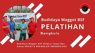 Korban Ternak Maggot Berbagi Pengalaman Ternak Maggot Tradisional Lebih Sulit   Budidaya BSF Modern