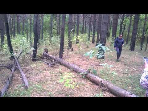 Сбор грибов 1сентября в Новосибирске.