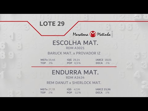 LOTE 29  Maratona Matinha