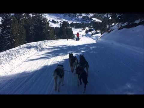 Dog Sledding in El Tarter, Andorra