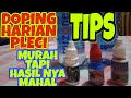Tips Pembuatan Doping Harian Buat Pleci Yang Bikin Gacor Dengan Harga Murah Meriah  Mp3 - Mp4 Download