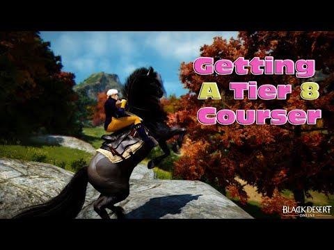 BDO - Getting A Tier 8 Courser - Tips & Methods