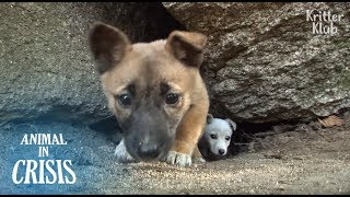 Puppies Living In A Huge Rock Are At A Life Crisis Without Any Food | Animal in Crisis EP124