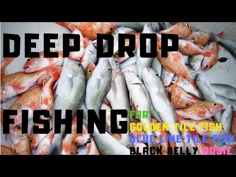 INSANE Deep Dropping Fishing For Golden Tile Fish, Blue Line Tile Fish And Black Belly Rosefish