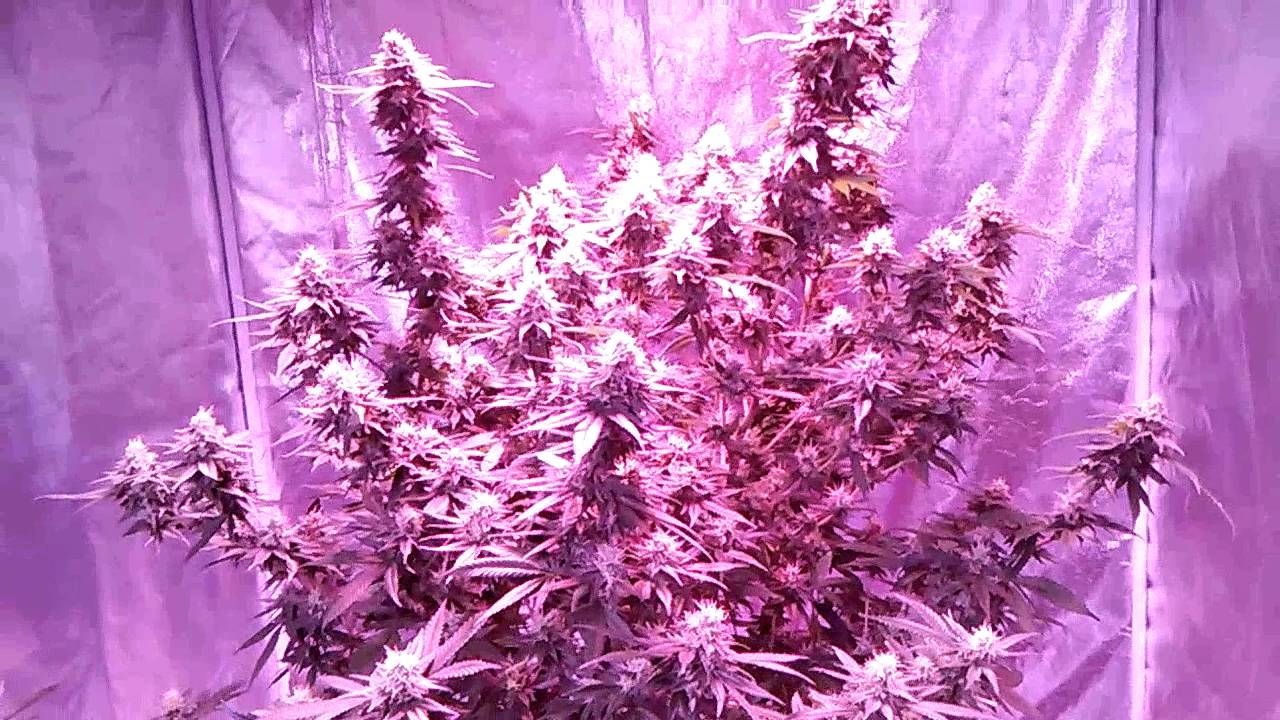 Complete Led Grow Tent & Image Is Loading Hydroponic ...