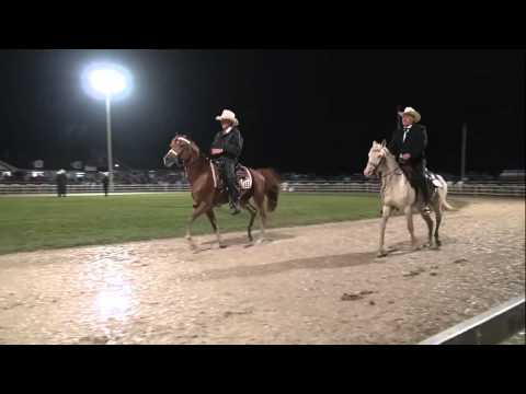 Missouri Fox Trotter World Championship 3yr.Open Stallions/Geldings 2015