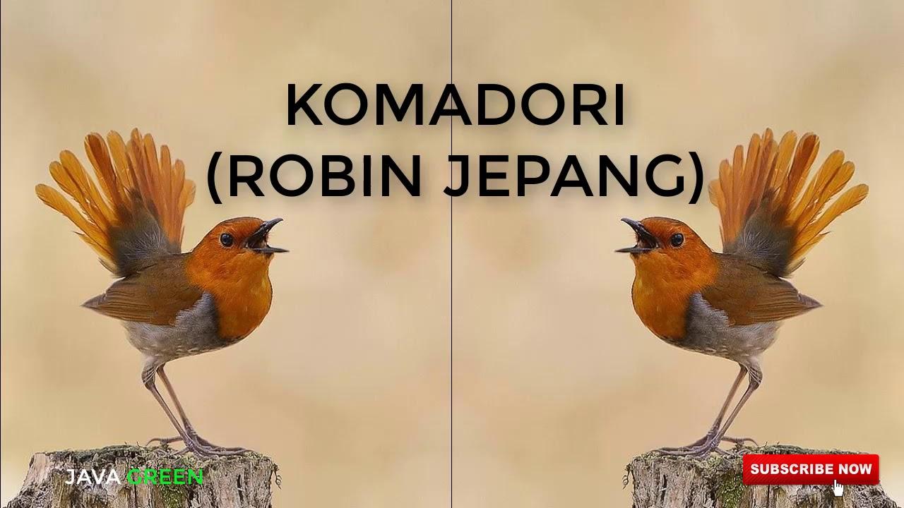Sangkar burung ukir oval sangkar burung kacer cucak ijo. SUARA BURUNG ROBIN JEPANG/KOMADORI GACOR UNTUK MASTERAN ...