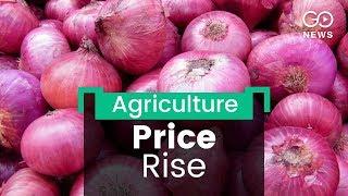 Onion: Price Rise