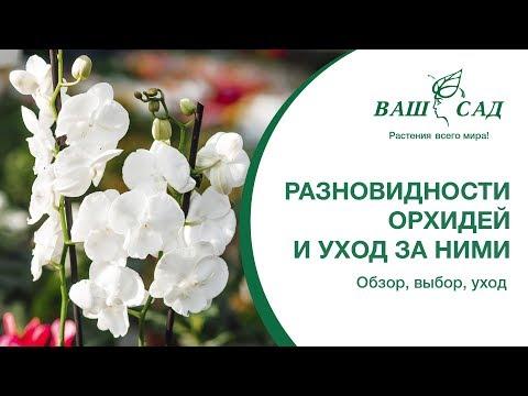Какие разновидности орхидей бывают  Ваш сад