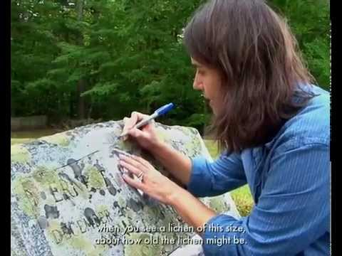 Studying Lichens on YouTube