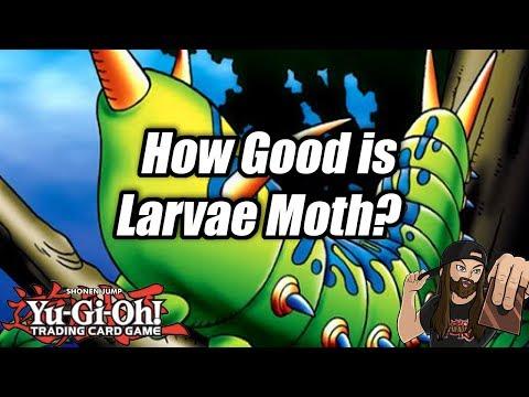 Yu-Gi-Oh! How Good is Larvae Moth? (ft. YugiNoNo!)