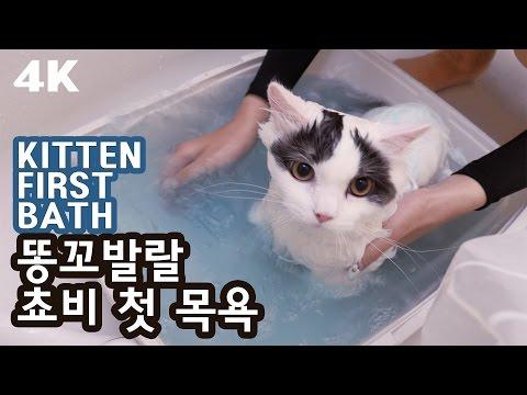 똥꼬발랄 쵸비의 첫 목욕. 의외의 모습! [4K] HYPERACTIVE KITTEN FIRST BATH