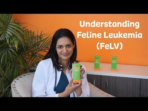 Understanding Feline Leukemia