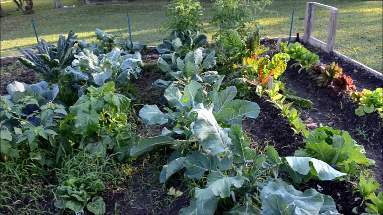 growing a fall heirloom vegetable garden 2012 3 youtube - Fall Vegetable Garden