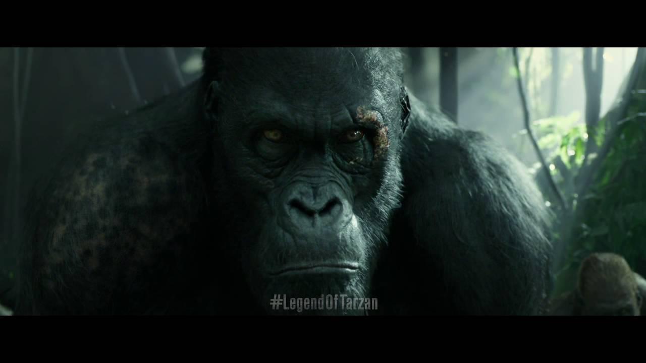 Legend of tarzan akut youtube - Tarzan gorille ...