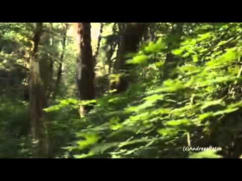 Et Les Oiseaux Chantaient(Relaxing, soothing music)