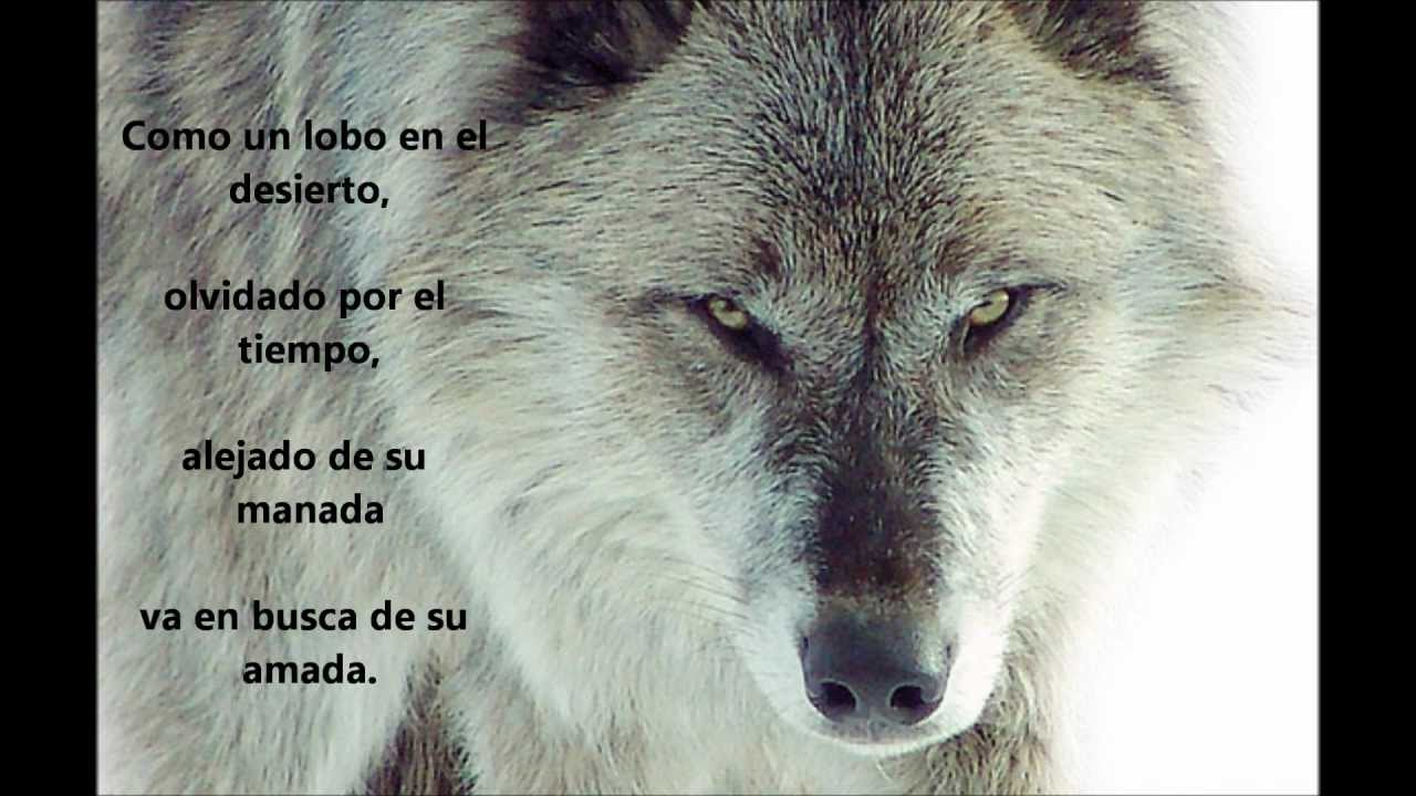 Poema De Amor Lobo Perdido Youtube