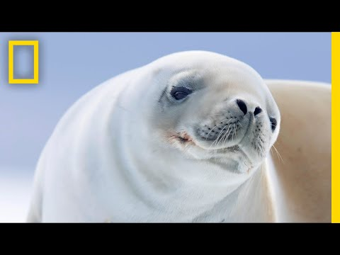 Take a 4-Minute Escape to the Blissful Serenity of Antarctica | Short Film Showcase