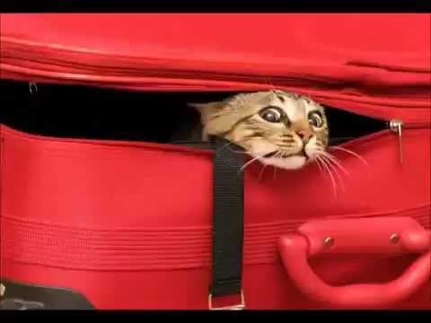 фото чемодан с вещами