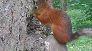 Белка в лесу грызет семечки