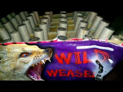 "Wild Weasel 500 gram cake by Blackcat fireworks  ""EXCLUSIVE"" demo and review"