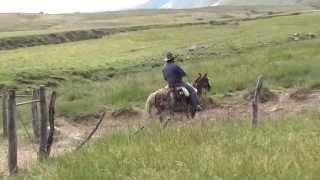 Magnifique travail des Gauchos en Argentine dans la Province de SALTA