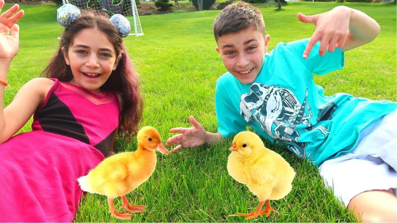 Heidi e Zidane arranjaram galinhas!