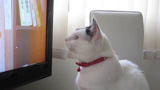 Tama is waiting for the moment calmly. It is the slight time when a...