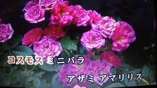 こんばんは~~(^◇^)・・・五月みどりさんの新曲にびっくりしています...