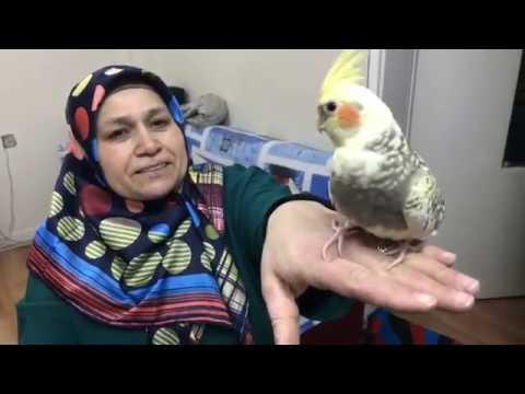 Kus bakımı nasıl yapılır canlı yayında anlatın bize sultan papağanı