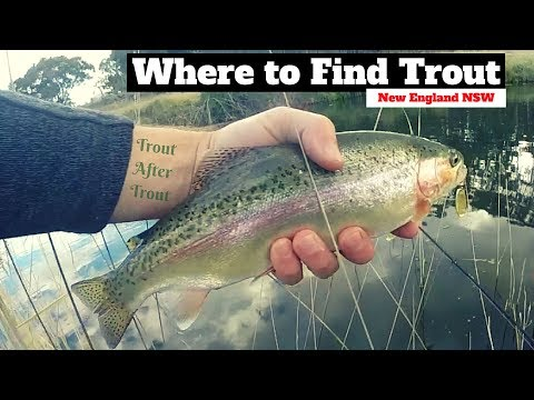 Where To Find Trout, New England NSW | Big Rainbow Trout Go Crazy!!!