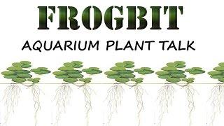 Aquarium Plant Talk - Frogbit