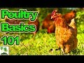 Brian's Poultry Update And The Basic's