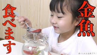 金魚を食べちゃいます!!!人生初の金魚の味は?!