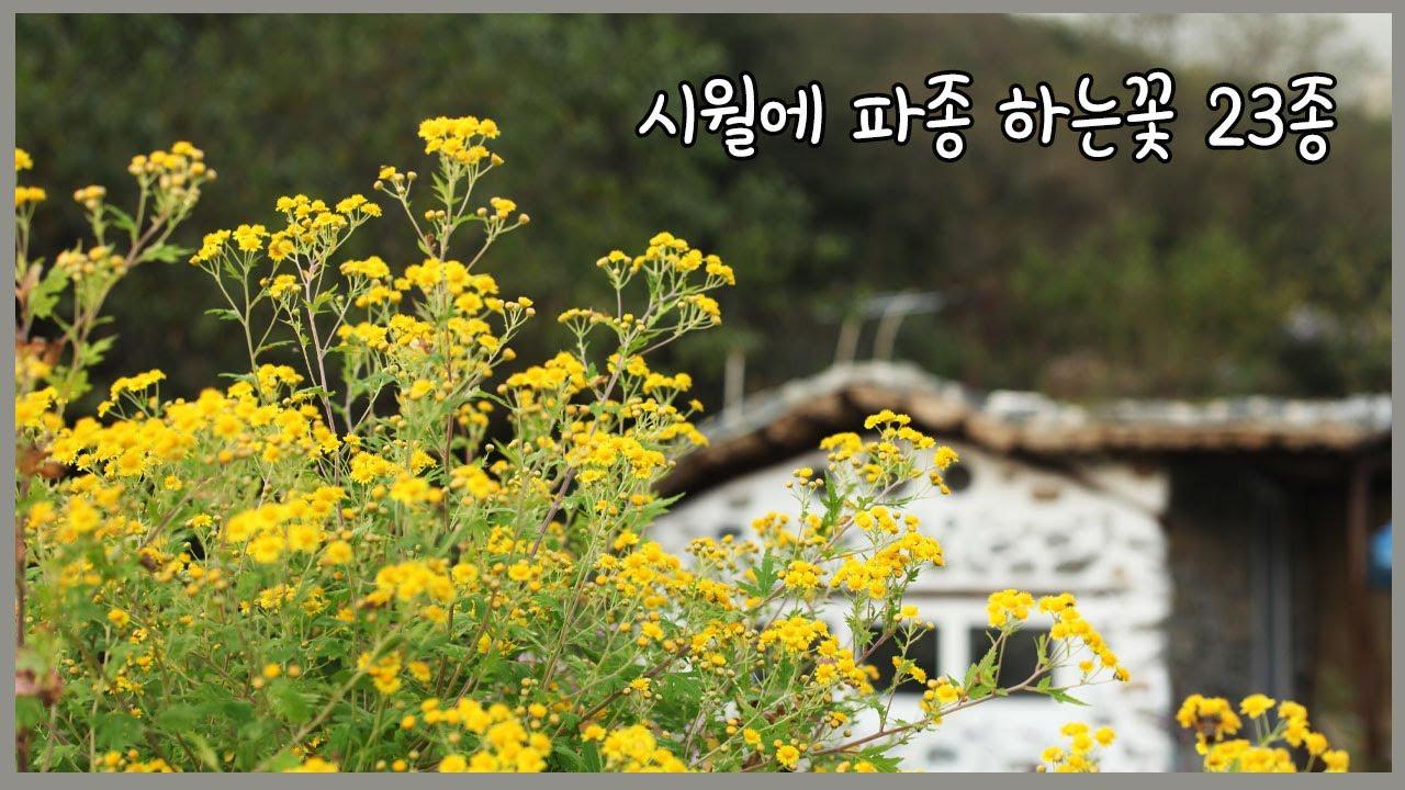 10월에 파종하는 꽃씨 23종류 | 산국차 만들기 | 불피워 콩사리 하며 추억여행