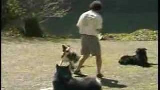 Dog Training Program | Ben Kersen's School For Dog Training