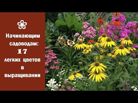 ❀ Начинающим садоводам: 17 легких цветов  в выращивании