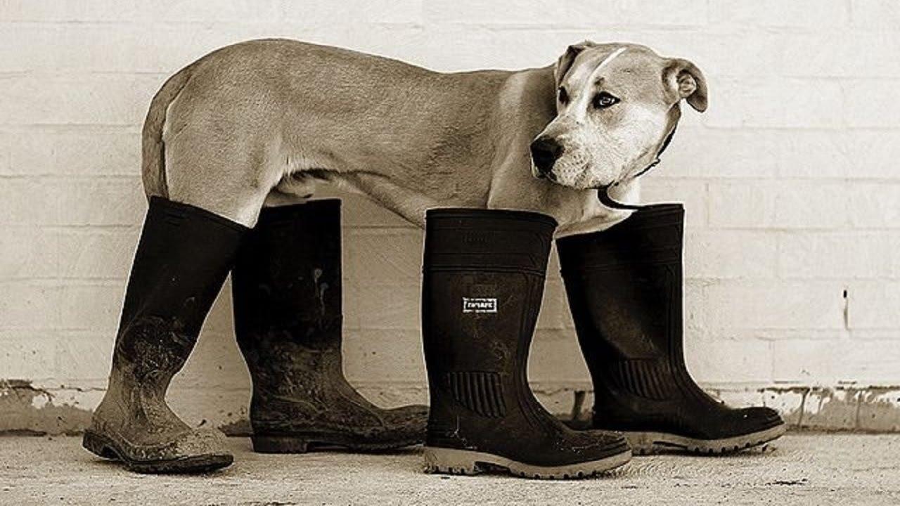 Обувь для собак своими руками! Одежда для собак! Обувь для собак ... f4686f1417e