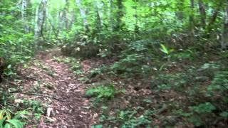 山の一本道をテクテク歩きます。 緑が気持ちよいです^^
