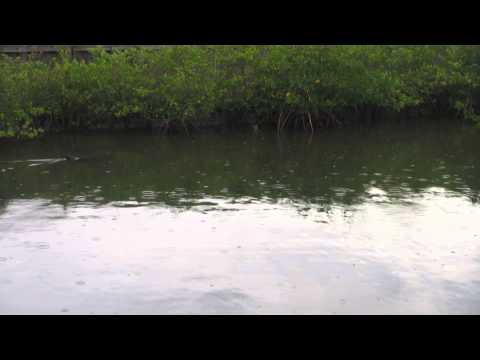 Bimini Bay Dolphin