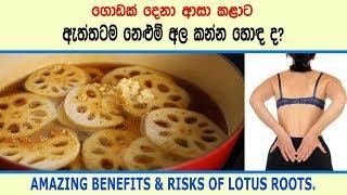 නළම අල කනන ඇතතටම හඳ ද - Amazing benefits of lotus roots